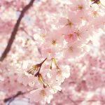 Equinocci de Primavera