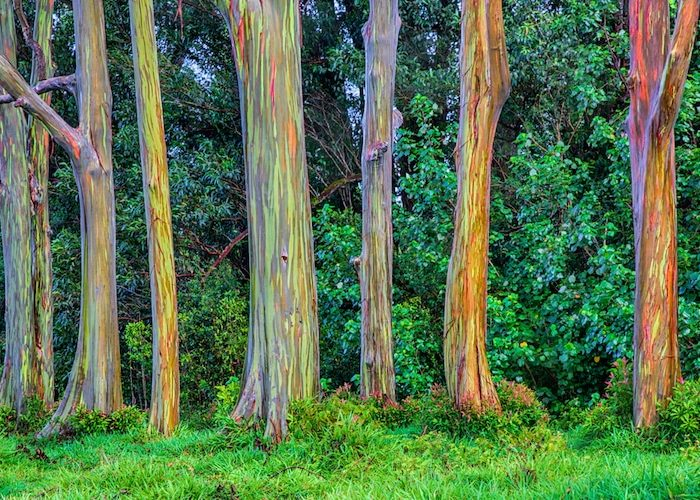 Árbol arco iris Pallars
